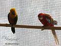 باغ پرندگان-اماکن دیدنی تهران-مکان های تفریحی تهران-amaken tafrihi tehran-baghe parandegan