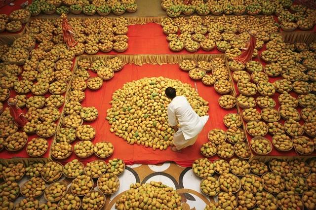 چیدن انبه برای خدای کریشنا-anbeh-در داخل معبدی در احمدآباد هند-ahmad abbad