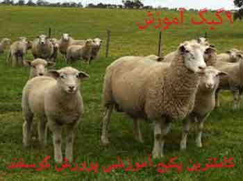 جامع_ترين_مجموعه_آموزشي_پرورش_گوسفند
