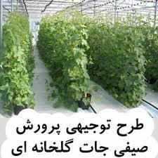 طرح-توجیهی-پرورش-صيفيجات-گلخانهاي