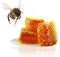پرورش-و-نگهداري-زنبور-عسل-19-صفحه-طرح