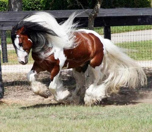 چند تصویر زیبا از اسب های دنیا-sale asb-سال اسب-tasvire asb-تصویر اسب-اسب مو افشان-horse-عکس اسب-اشب حیوانی نجیب است-خصوصیات اسب، شخصیت ملی مردم چین است