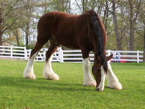 چند تصویر زیبا از اسب های دنیا-sale asb-سال اسب-tasvire asb-تصویر اسب-اسب مو افشان-horse-عکس اسب-اشب حیوانی نجیب است-farsimeeting.com-خصوصیات اسب-شخصیت ملی مردم چین است-فارسی میتینگ